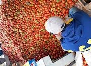 Stok Tomat di Pasar Tani Rumah Koran Banyak
