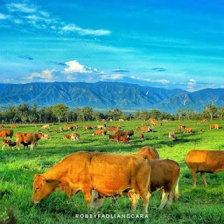 Pemandangan Padang Mangateh