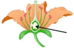ilustrasi bagan bagian bunga kelas 6