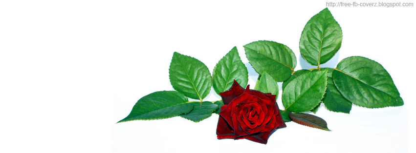 Dark Red Rose Facebook Timeline cover