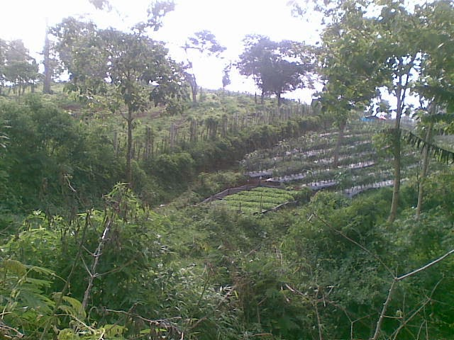 Foto%25285061%2529 Di Jual Tanah Di Puncak Cipanas Murah, Tanah Kebun Jual tanah di cipanas jual tanah di puncak jual tanah di taman bunga nusantara