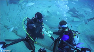 Man Proposes To His Girlfriend In The Midst Of Sharks At The Bottom Of The Ocean. Photos