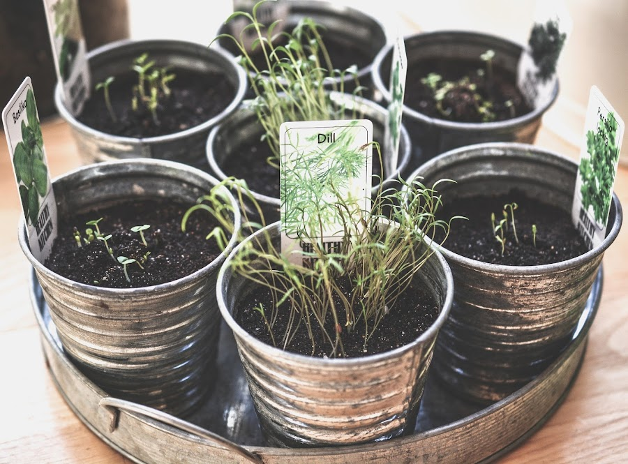 Plantas medicinales que podemos sembrar en el jardín o en el balcón