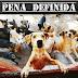 BRASIL: PENA DE DOIS A QUATRO ANOS PARA QUEM MATAR CÃES E GATOS