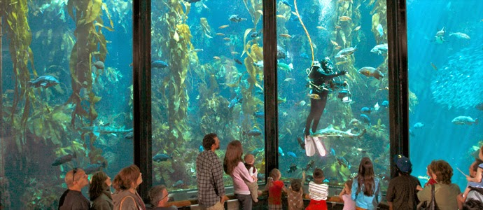 Holiday Area: Tips for Visiting the Monterey Bay Aquarium