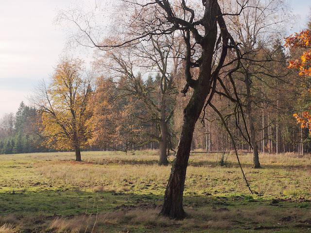 Die Bäume stehen schon auf dem Truppenübungsplatz