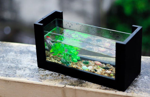 The Benefits of Having an Aquarium at Home