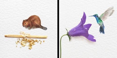 00-Watercolor-Animals-Frank-Holzenburg-www-designstack-co