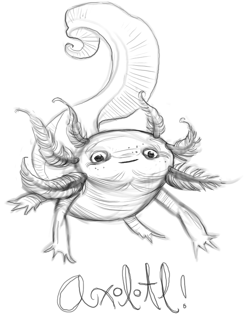 axolotl coloring pages - photo#8