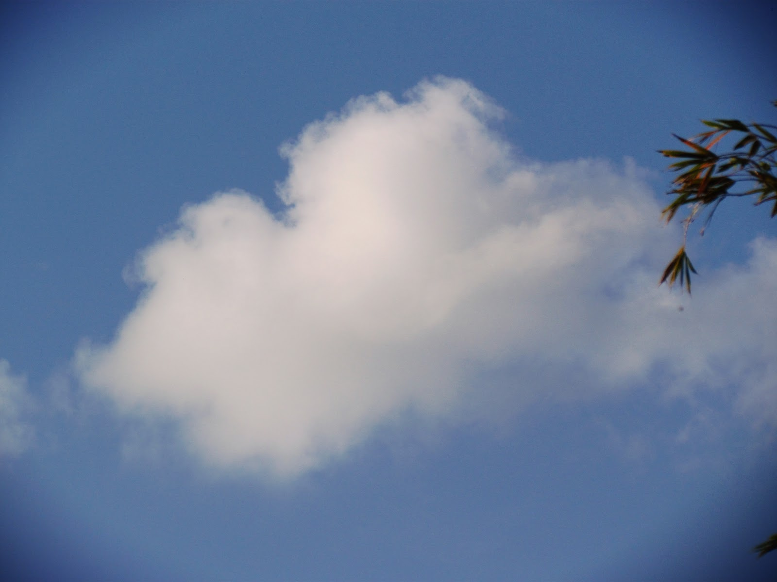A nostalgic blue sky with white, fluffy clouds on a perfect afternoon in Florida with palm trees