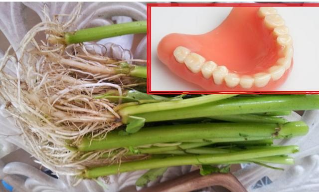 Tak Banyak yang Tahu, Ternyata Akar Kangkung Bermanfaat Untuk Sembuhkan Sakit Gigi loh!