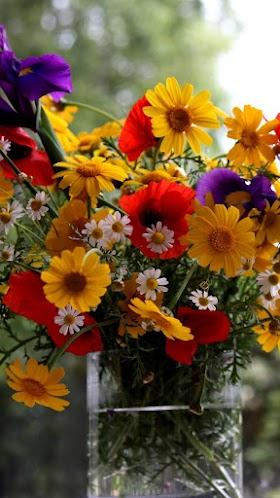 Chậu Hoa Cúc, Hoa Cúc Đẹp