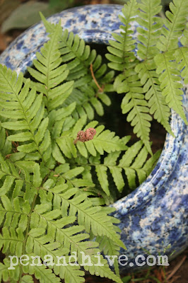 broken pot fern