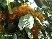 Orange blossoms from a jungle plant - Kyoto Botanical Gardens Conservatory, Japan