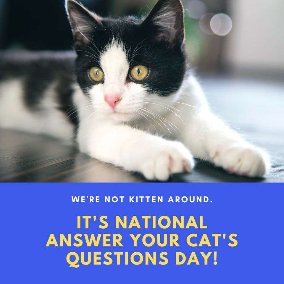 National Answer Your Cat's Questions Day Wishes Beautiful Image