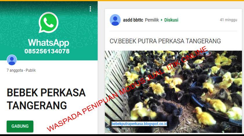 Penjual Itik Online Tipu Warga Pangkep Ratusan Juta Rupiah