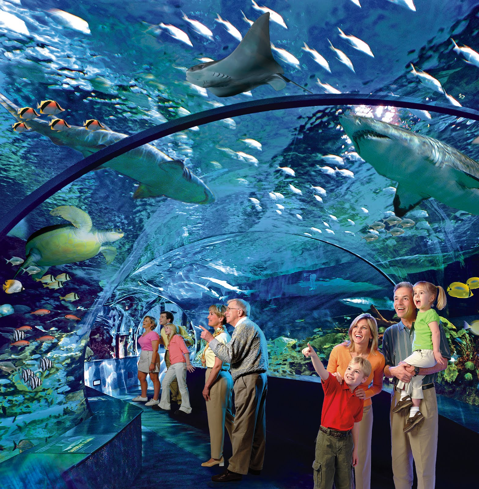 Believe it Or Not Toronto will soon have a Ripley's Aquarium