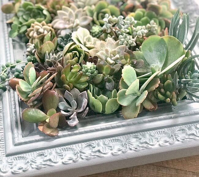 How to Make a Succulent Planter Frame