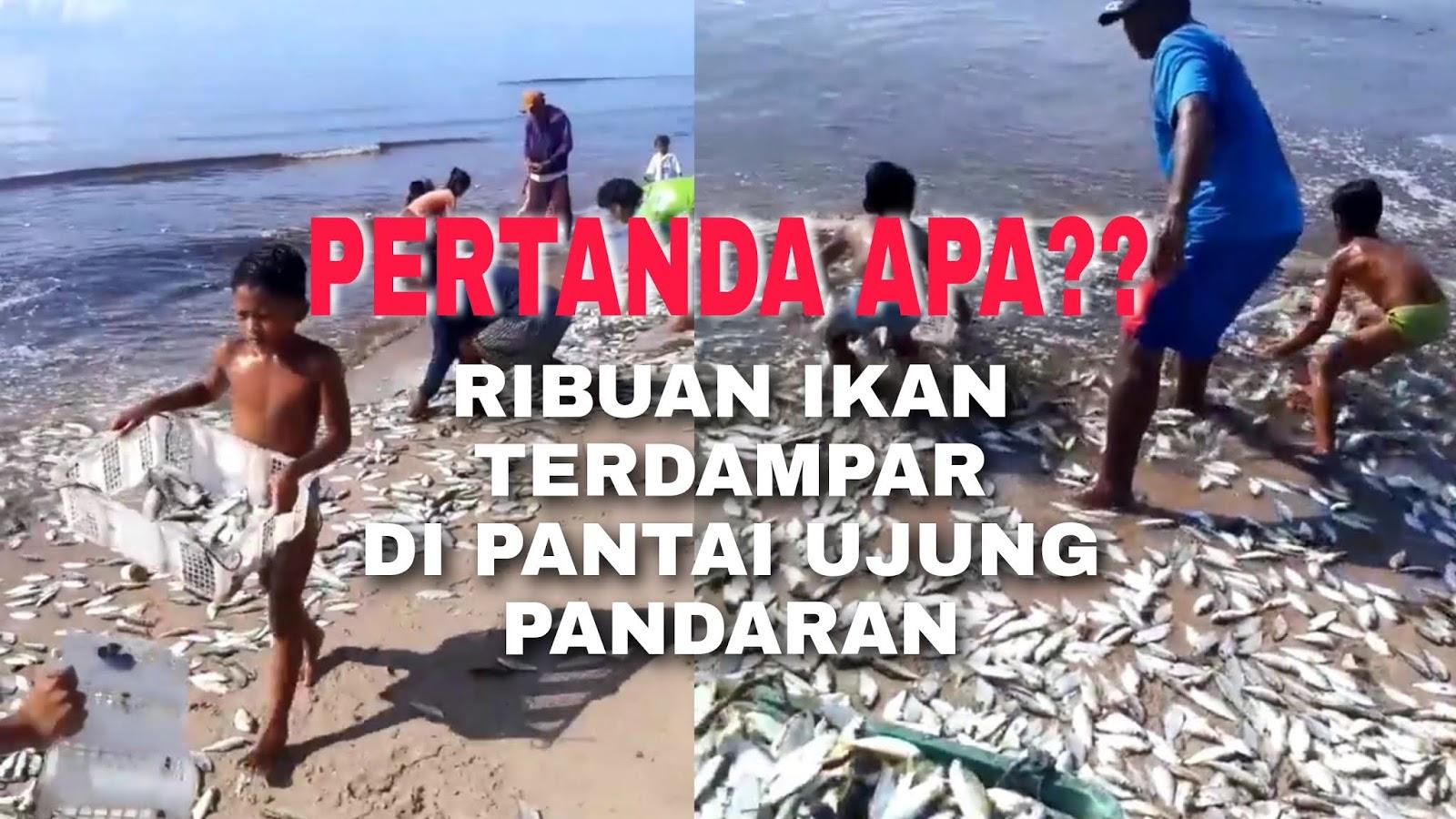 nelayan pantai kalab panen ikan
