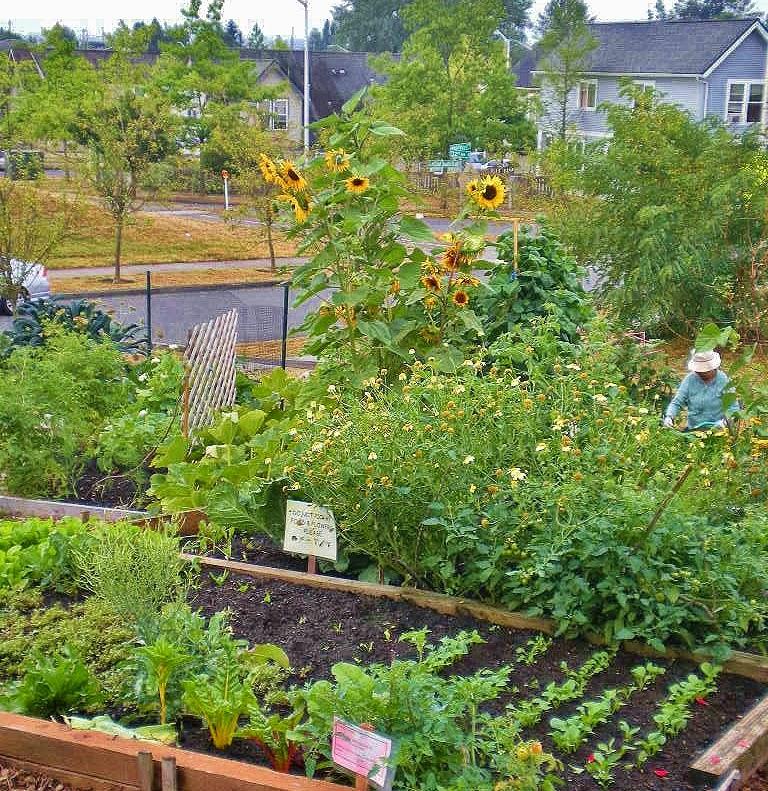 Urban Landscape, Native Landscape: New Holly Youth