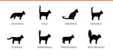 Posturas básicas de la cola de gato