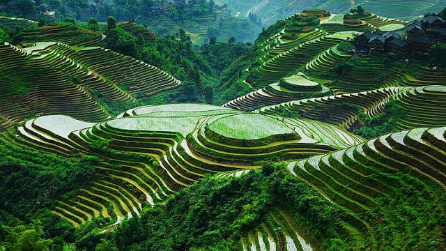 World's Oldest known Rice Fields Discovered in East China
