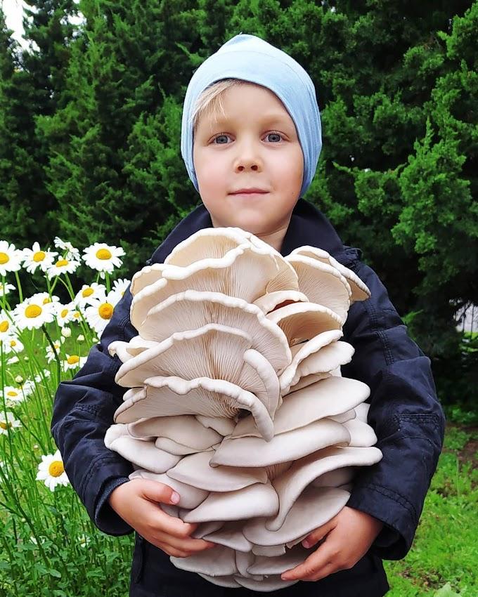 Why Kids should eat mushrooms? | Mushrooms for health | Biobritte mushrooms
