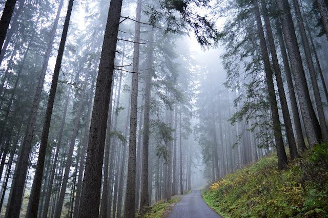 escursioni trekking in val di fiemme