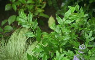 Alan plants more dense around the patio