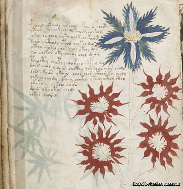 Manuskrip Voynich [2]