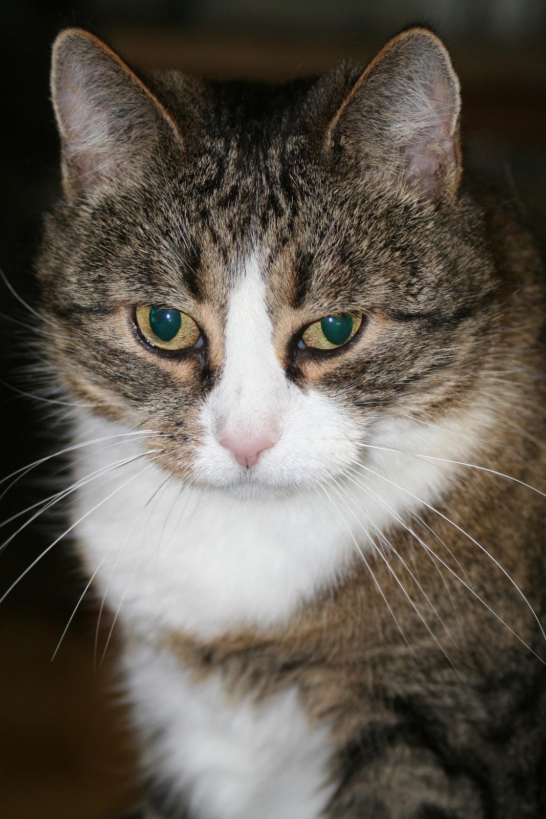 Kissan Vatsa Löysällä