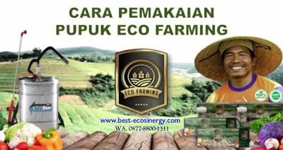 Cara Aplikasi Eco Farming untuk Padi Luas Lahan 1 Hektar