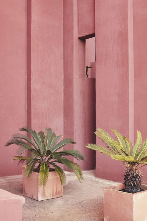 collage, rosa, pink, hues, color, flowers, plants, palm