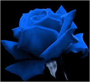 Mavi gül ne anlama geliyor
