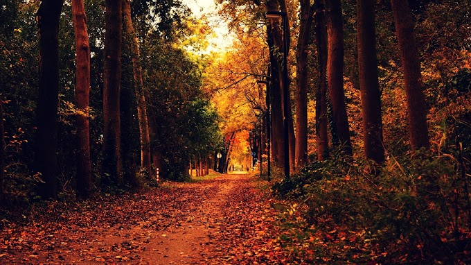 Autumn Nature Road Wallpapers