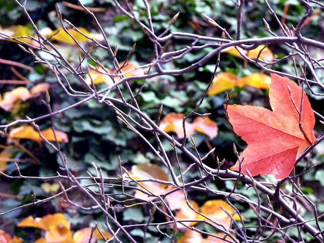 Fall, leaf, branches
