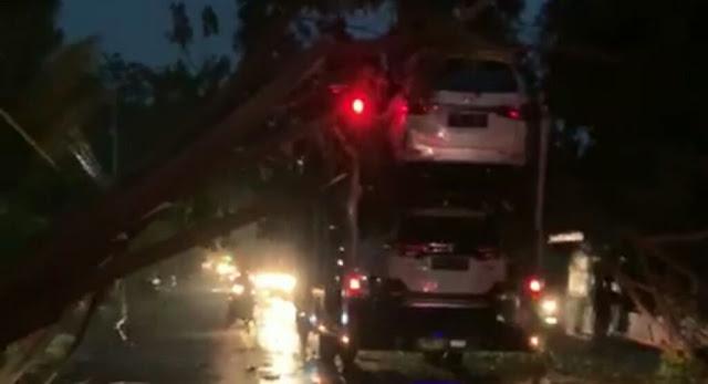 Pohon Tumbang di Situbondo Menimpa Truck Bermuatan Mobil