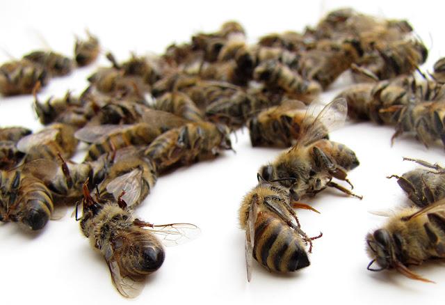 Σύνδρομο κατάρρευσης μελισσιών...Όταν βρίσκουμε άδεια την κυψέλη
