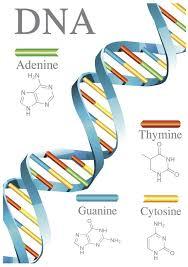 <alt img src='gambar.jpg' width='100' height='100' alt='DNA'/>