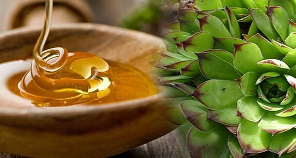 HONEY AND HOUSELEEK AGAINST Uterine Fibroids and Ovarian Cysts!