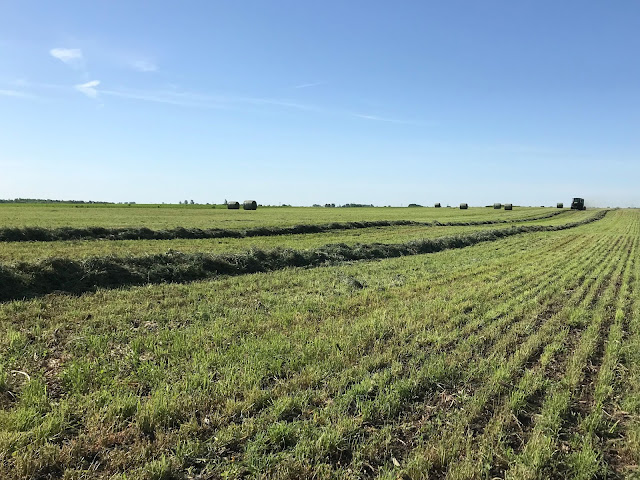 Fall cutting alfalfa 2021 minnesota