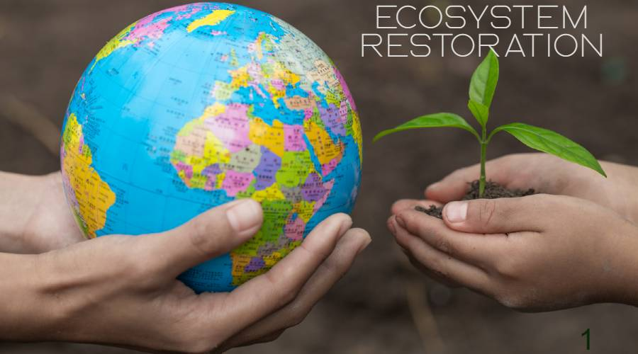 World Environment Day 2021, Saturday 5 June: Celebrating Ideas, History and Theme