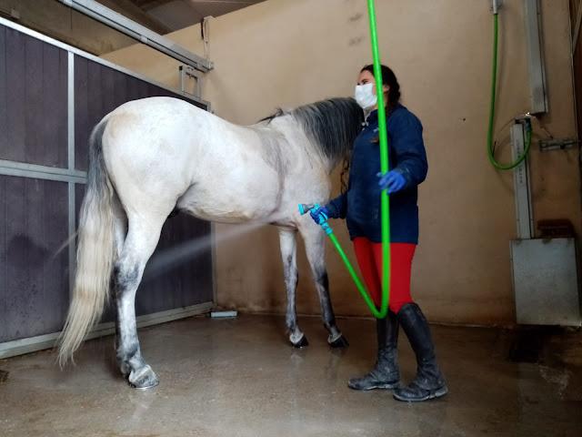 Animales Puy du Fou España