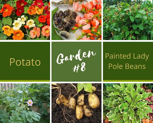 Rock-n-Zen Garden Plot #8 plants identification.