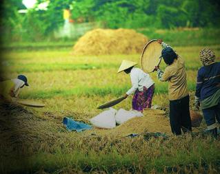 4 Upaya Peningkatan Produktivitas Pertanian Di Indonesia Peta