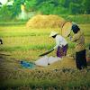 4 upaya peningkatan produktivitas pertanian di Indonesia