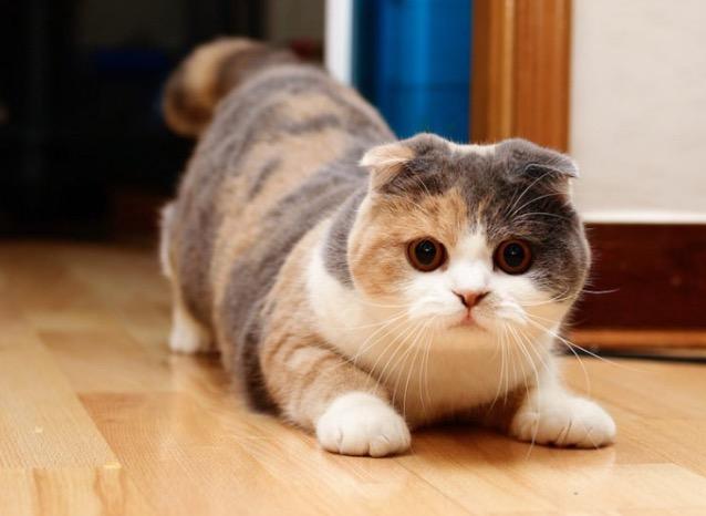 Inilah 8 Baka Kucing Termahal Di Dunia