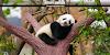ज्यादातर जानवर पेट के बल सोते हैं तो फिर इंसान पीठ के बल क्यों सोता है / GK IN HINDI