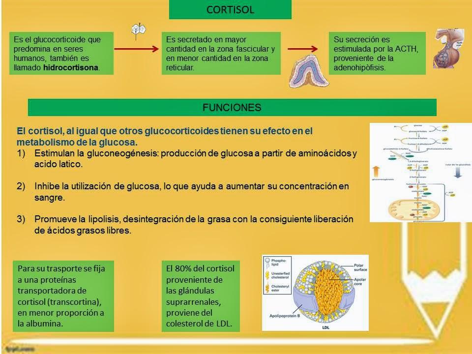 Dieta cetogénica medicina natural