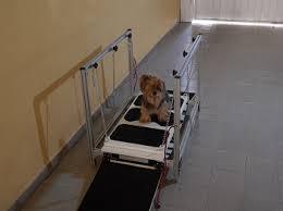 fortalecimento de musculos em cães